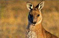 »Tasmanien aktiv erleben - Rundreise Tasmanien«