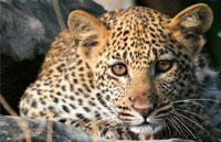 »Wildes Herz Afrikas - Privatreise Botswana und Simbabwe«