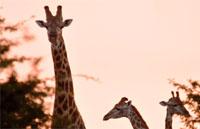 »Wunderwelt Südafrika - Erlebnisreise durch Südafrika«