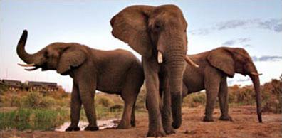 »Glanzlichter des Nordens: Südafrika Nationalparks«