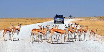 »Fahrt im Etosha Nationalpark - Rundreise Namibia«