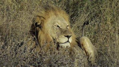 »Tierreiches Safari-Abenteuer im Krüger-Nationalpark«