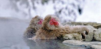 »Heiße Quellen in Yamanouchi - Faszination Japan«
