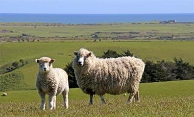 »Natur hautnah erleben - Naturrundreise Neuseeland«