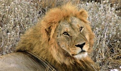 »Südafrika Rundreisen im Safari Truck«