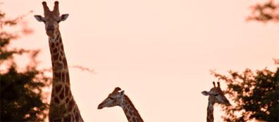 »3 Wochen Studienreise Südafrika: Naturzauber & Traditionen«