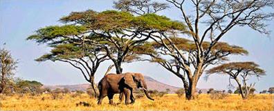 »2 Wochen Erlebnisreise Serengeti Tansania«