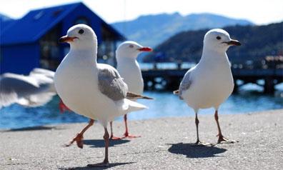 »Entdecken Sie die Flora und Fauna in Neuseeland«