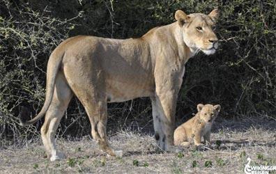 »Zu den Naturwundern Südafrikas«